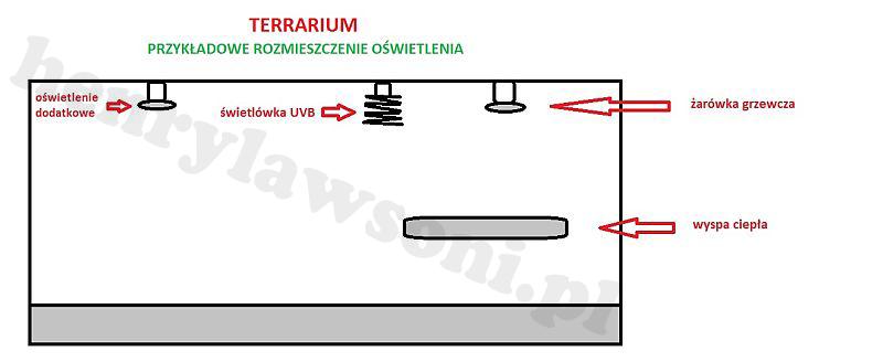 terrarium kopia